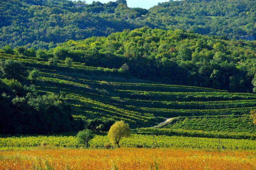 wetourguide colli Berici le strade del vino